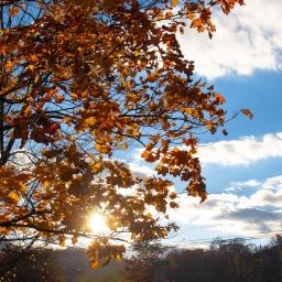 . . . and Autumn Glory
